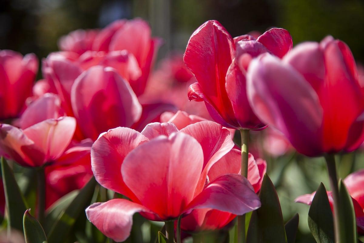 diverse bloemen gefotografeerd met tegenlicht bij Schonenberg planten en bomen in Volkel