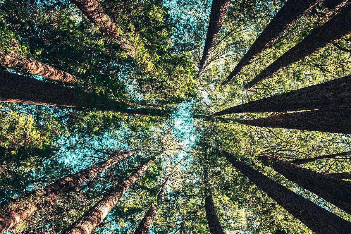 Lange bomen vanaf de grond gefotografeerd
