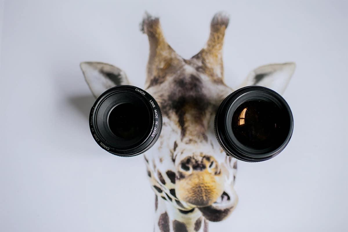 Giraffe met als ogen objectieven